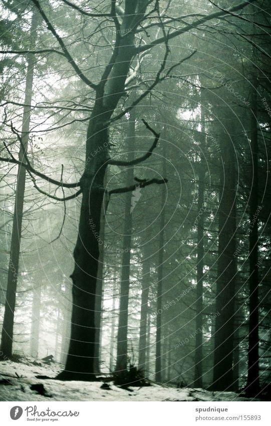 death and all his friends Baum Winter Einsamkeit Wald dunkel Tod grau Nebel Trauer Ast Vergänglichkeit Verzweiflung kahl Geäst diffus