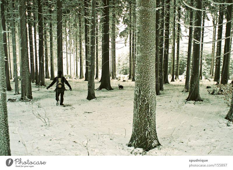 so quiet. Wald Baum Fichte Schnee Raureif Eis kalt Winter Winterwald wandern Ast frieren ruhig Frieden schön
