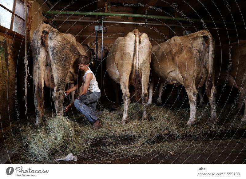 Stallarbeit Milch Arbeit & Erwerbstätigkeit Beruf Arbeitsplatz Landwirtschaft Forstwirtschaft Tier Nutztier Kuh Kuhstall Bergbauer melken melker Bregenzerwald