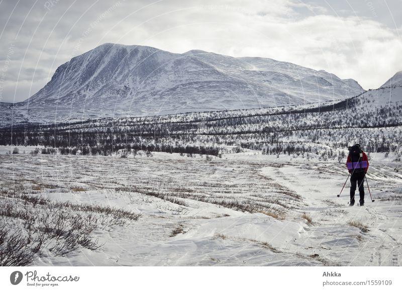 Rondane V Ausflug Abenteuer Ferne Freiheit Wintersport Skifahren 1 Mensch Natur Landschaft Eis Frost Schnee Berge u. Gebirge Gipfel Schneebedeckte Gipfel laufen