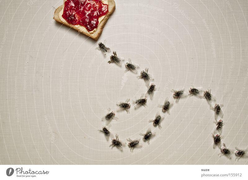 Mittagspause lustig Lebensmittel Fliege Ernährung Dekoration & Verzierung süß Kreativität Idee Kunststoff Insekt Frühstück lecker Brot Bioprodukte Fasten beißen