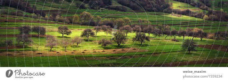 Apfelgarten auf den Hügeln im zeitigen Frühjahr Natur Ferien & Urlaub & Reisen Pflanze grün Baum Landschaft Wald Berge u. Gebirge Frühling Wiese natürlich Gras
