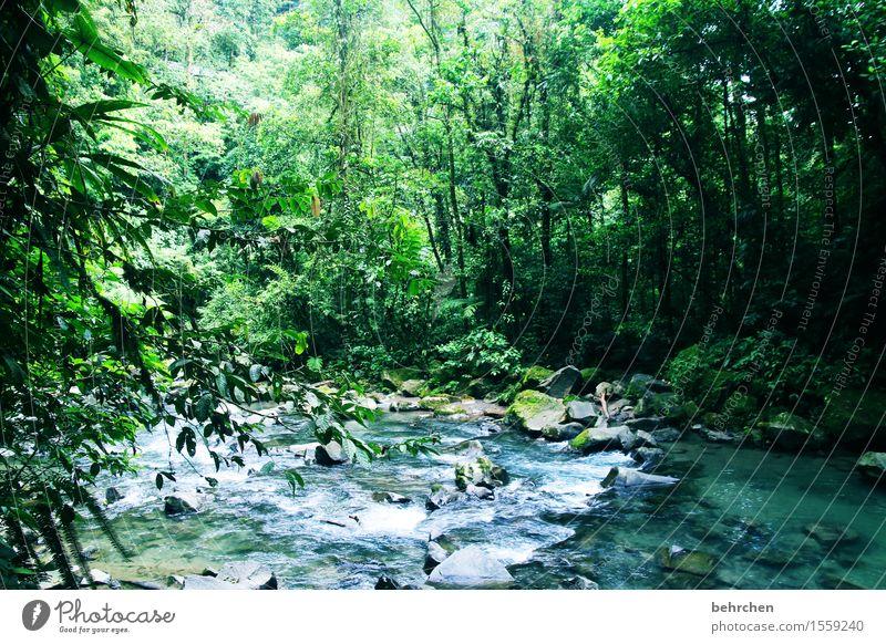 grüne lunge (teil 2) Ferien & Urlaub & Reisen Tourismus Ausflug Abenteuer Ferne Freiheit Natur Landschaft Pflanze Wasser Klimawandel Baum Sträucher Wald Urwald