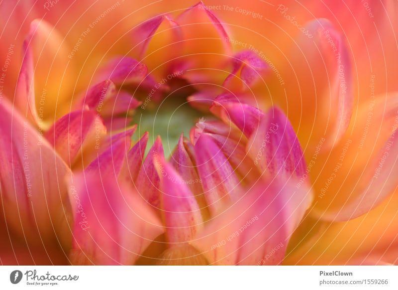 Blüte Lifestyle Reichtum elegant schön Kosmetik Wellness harmonisch Meditation Duft Natur Landschaft Pflanze Blume Blatt Blühend ästhetisch orange Gefühle