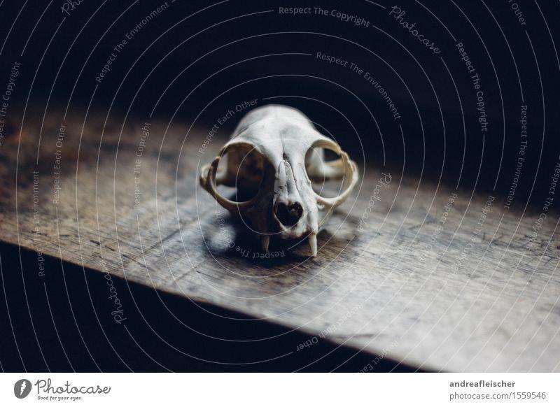 Die Ästhetik des Todes Tier Wildtier Totes Tier 1 Gefühle Kraft Tierliebe schön Gelassenheit ruhig Schmerz Sehnsucht schuldig Angst Entsetzen Todesangst