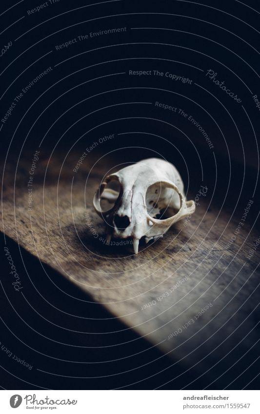 Der Tod als Ästhet Natur Tier dunkel Angst Wildtier ästhetisch Lebewesen Zukunftsangst dünn Gebiss Holzbrett gruselig mystisch Skelett Biologie