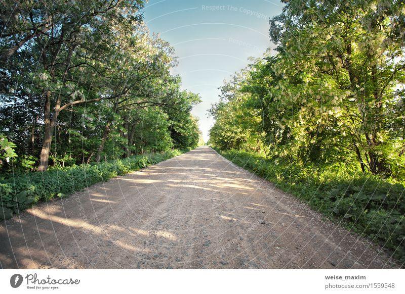 Landstraße mit blühenden Akazienbäumen. Sonniger Frühlingstag Himmel Natur Ferien & Urlaub & Reisen Pflanze blau grün weiß Baum Landschaft Wald Blüte natürlich