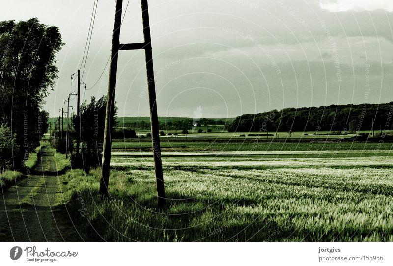 Grüne Einöde Kornfeld Feld Fußweg Landwirtschaft ökologisch Strommast Hochspannungsleitung Elektrizität Ernährung Auf dem Land