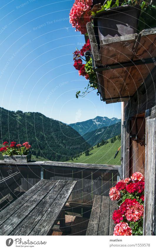 bald wieder Ferien & Urlaub & Reisen Ausflug Sommerurlaub Dekoration & Verzierung Landschaft Pflanze Himmel Wolkenloser Himmel Wetter Schönes Wetter Gras Blüte