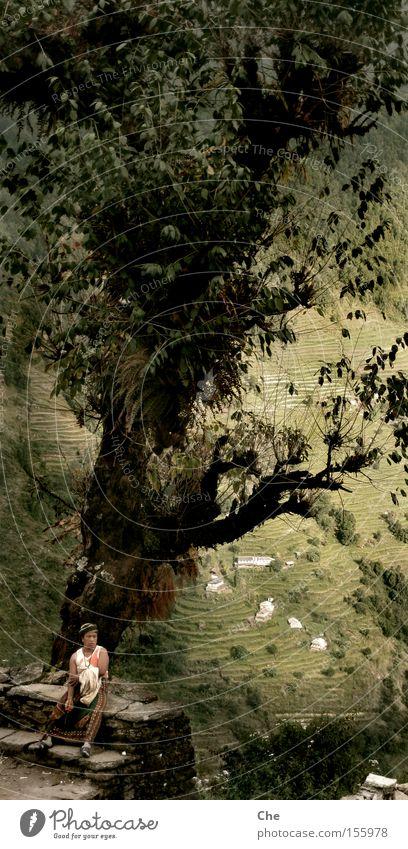 Baumbart und Frau Zwerg Frau alt grün schön Baum Ferne hoch groß Sicherheit Macht Asien Aussicht tief Fernweh anonym Pflanze