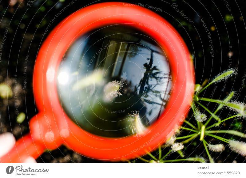 Lupenblick Natur Pflanze Grünpflanze exotisch Sonnentaugewächse Glas glänzend rund grün rot vergrößert untersuchen fein filigran Tropfen Farbfoto