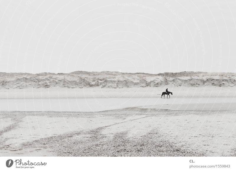 am strand Mensch Himmel Natur Ferien & Urlaub & Reisen Erholung Landschaft ruhig Tier Ferne Strand Erwachsene Umwelt Leben Freiheit Sand Tourismus
