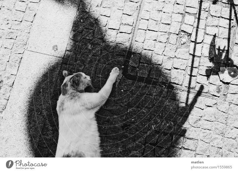 Mieze träumt im Schatten Menschenleer Tier Haustier Katze Tiergesicht Pfote 1 schlafen träumen schwarz weiß Erholung Schwarzweißfoto Außenaufnahme