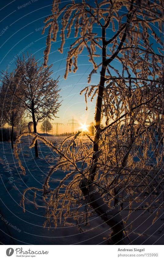 Winterwunderland Himmel weiß Baum Sonne blau Winter kalt Schnee Wiese Eis Feld Frost Dresden Raureif Himmelskörper & Weltall