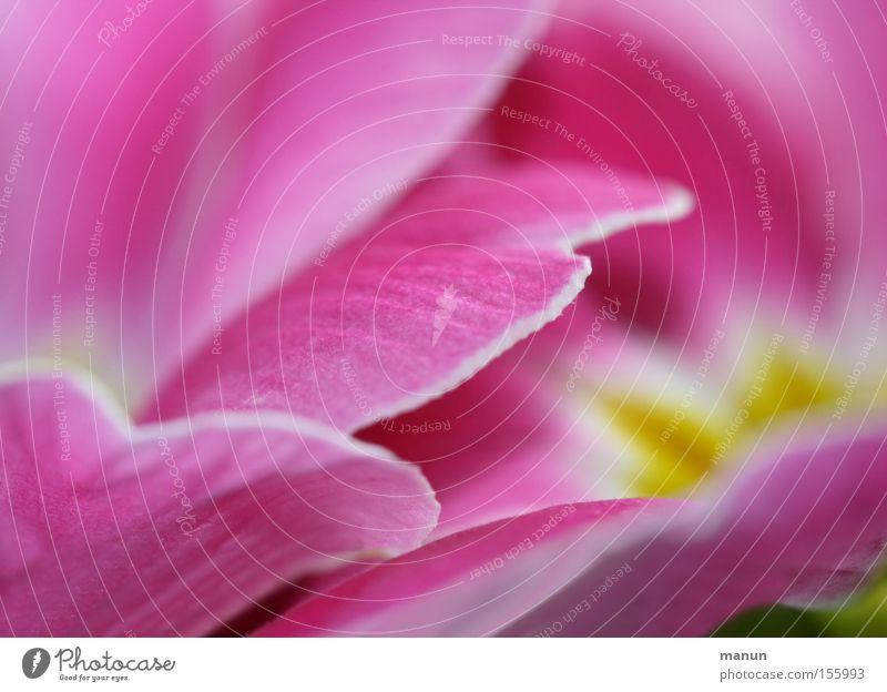 pretty in pink Pflanze schön Blume Frühling Blüte Stil Glück rosa Zufriedenheit Design frisch ästhetisch Blühend Romantik Wohlgefühl Duft