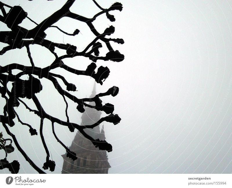 baumarchitektur Baum Nebel Winter kalt dunkel Rathaus Gebäude mystisch geschnitten Schwarzweißfoto Angst Panik knubbel Religion & Glaube unheimlich gruselig