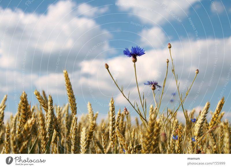 Alles bio II Lebensmittel Getreide Ernährung Bioprodukte Vollwertkost Ackerbau Biologische Landwirtschaft ökologisch Ernte Natur Frühling Sommer Schönes Wetter