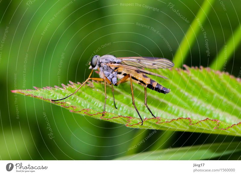Insekt / Fliege Natur Tier Wildtier Biene 1 klein Farbfoto Nahaufnahme Makroaufnahme Tag Profil