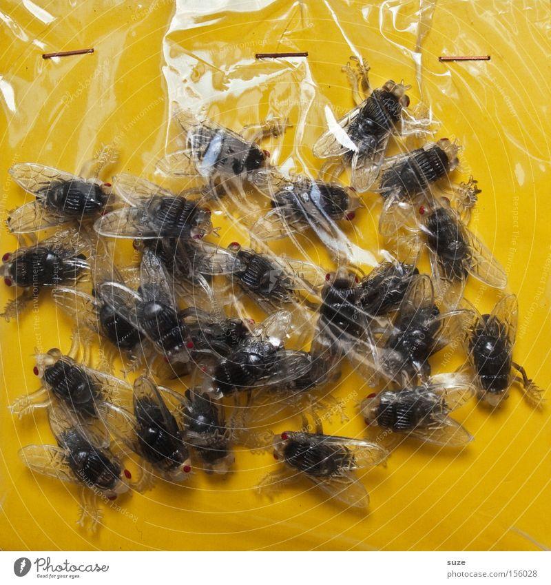 Alles frisch! gelb lustig Feste & Feiern Fliege frisch Dekoration & Verzierung viele Kunststoff gruselig Insekt Ekel Halloween Verpackung Folie Verpackungsmaterial Scherzartikel