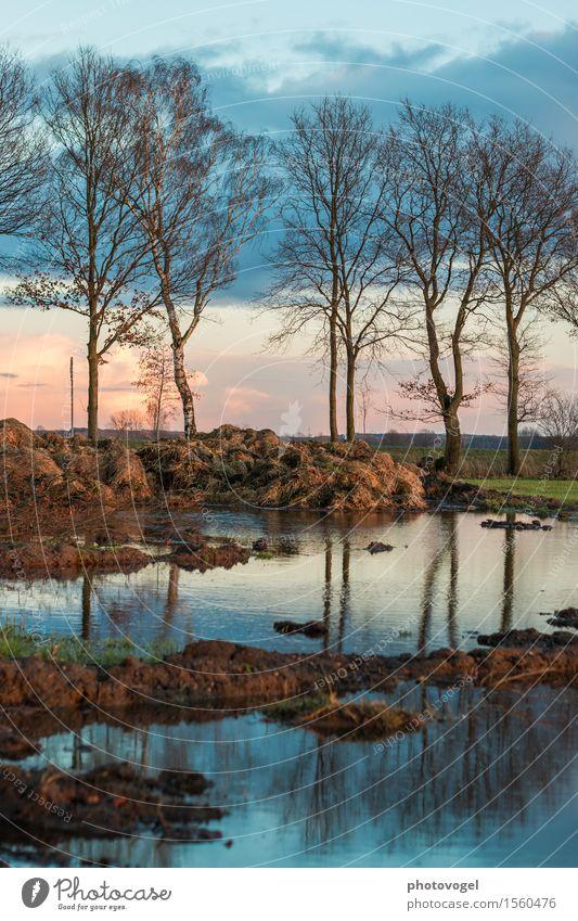 Abendstimmung Umwelt Pflanze Erde Wasser Schönes Wetter Baum Feld blau braun grün Zufriedenheit Misthaufen Pfütze Abenddämmerung Spiegelbild Farbfoto mehrfarbig