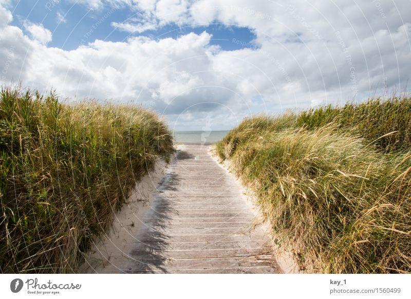Auf zum Strand! Ferne Freiheit Sommerurlaub Meer Insel Natur Landschaft Sand Wolken Schönes Wetter Gras Küste Nordsee Föhr Erholung wandern