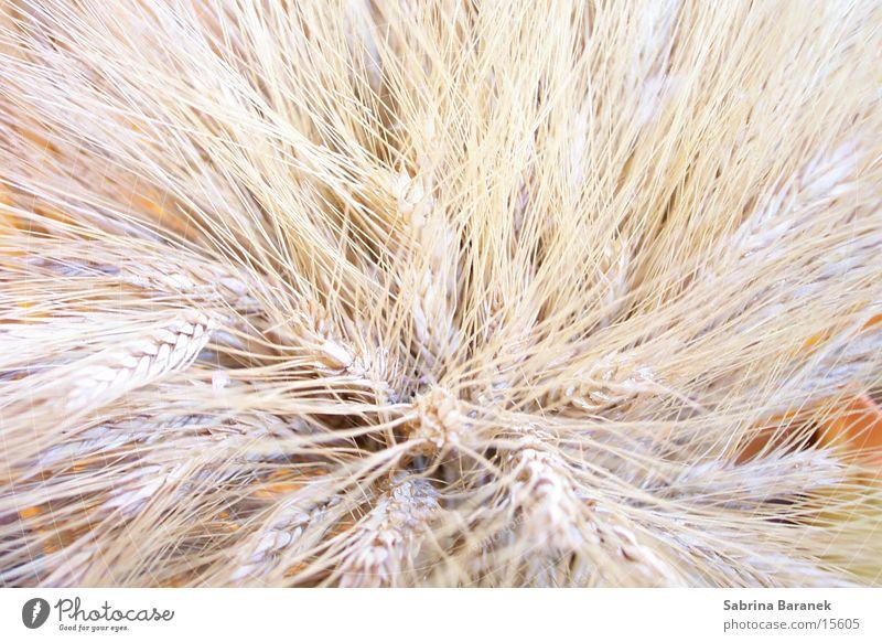 weizen hell Getreide Korn beige getrocknet