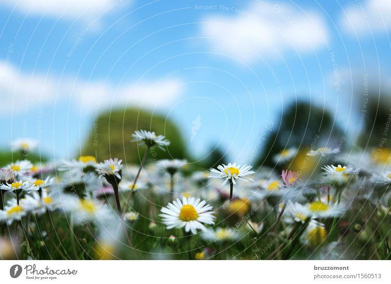 10 Bier zuviel Vegetarische Ernährung Alternativmedizin Natur Pflanze Himmel Wolken Frühling Sommer Park Wiese Blume Blumenwiese Gänseblümchen Duft schön blau
