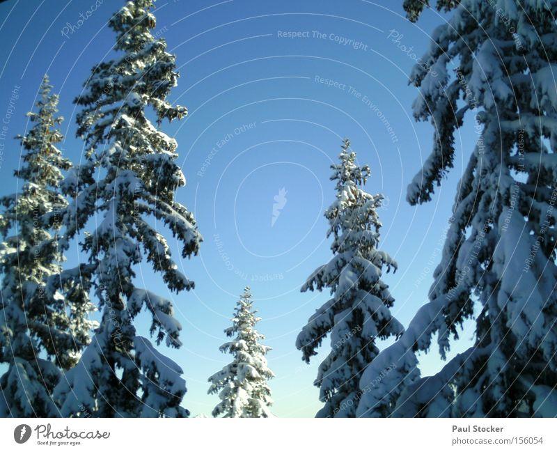 winterlandschaft Himmel Winter Wald Schnee Idylle Textfreiraum hoch Wolkenloser Himmel Baumkrone Schneelandschaft Nadelbaum Nadelwald Winterwald Winterstimmung