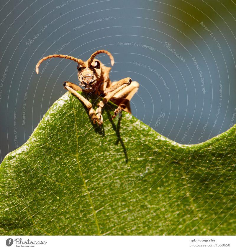 unbekannter Käfer Natur blau grün Sommer Tier Wald Umwelt sprechen Gefühle Wiese lustig Denken Garten braun Park Wildtier