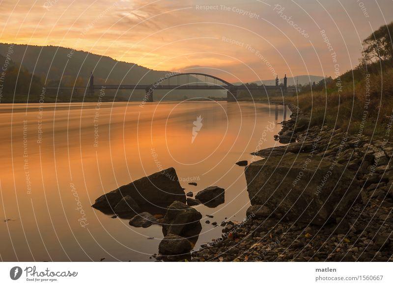 an der Elbe Natur Landschaft Pflanze Wasser Himmel Wolken Sommer Wetter Schönes Wetter Baum Gras Wald Hügel Flussufer Brücke dunkel blau braun orange rosa