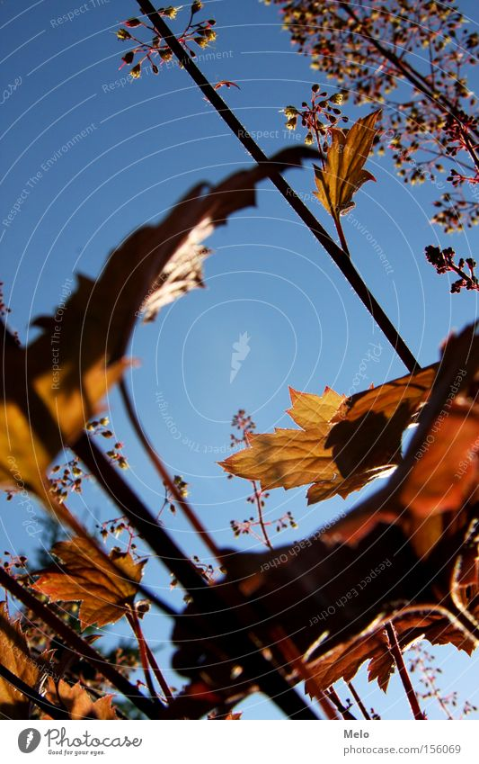 kleine Gedanken Himmel Pflanze Blüte Blatt blau Stengel Blick Jahreszeiten Ecke