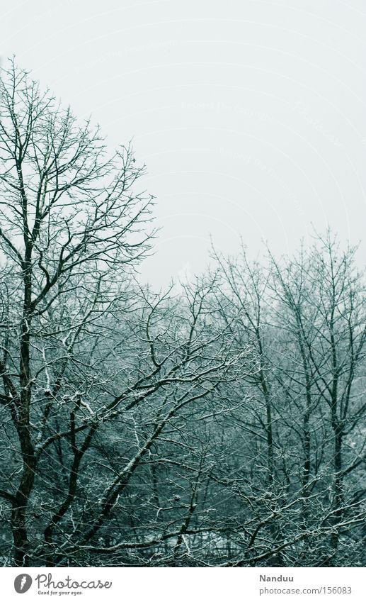 grau Natur Himmel Baum Winter kalt Schnee grau Eis Wetter trist Frost Ast Vergänglichkeit Raureif Dezember Januar