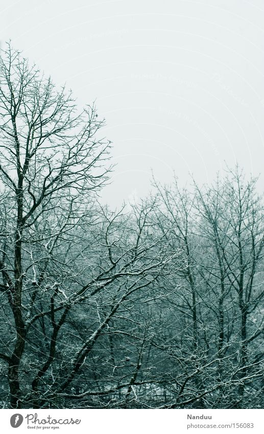 grau Wetter Winter Dezember Januar Frost kalt Eis Raureif Baum Ast Himmel trist einfarbig Natur Vergänglichkeit Schnee