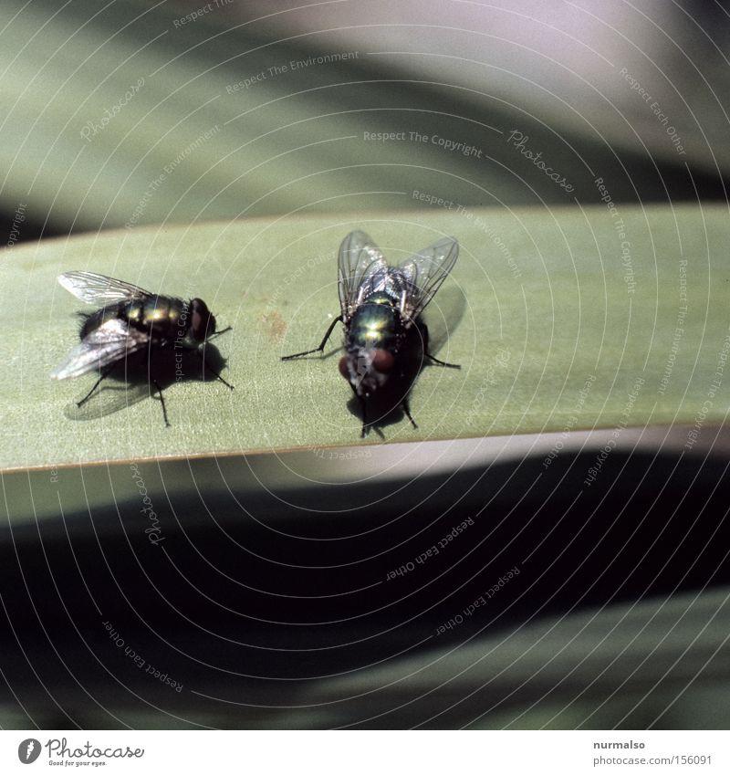 Treffen sich zwei . . . dreckig Fliege fliegen Luftverkehr Bad Flügel Insekt Toilette Kot krabbeln Wurm unbequem Facettenauge
