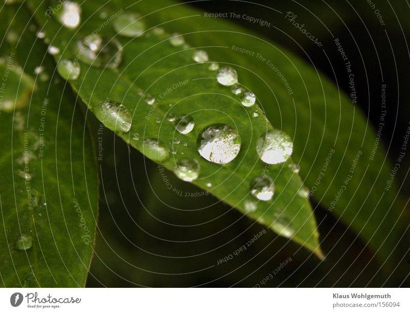 Schätze der Natur Pflanze Sommer Wasser Blatt ruhig Traurigkeit Regen Tau Kletterpflanzen