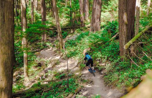 Schlumpf? Natur Pflanze blau Baum Sonne Erholung Landschaft Wald Berge u. Gebirge Umwelt Wege & Pfade Sport Freizeit & Hobby ästhetisch Klima Fahrradfahren