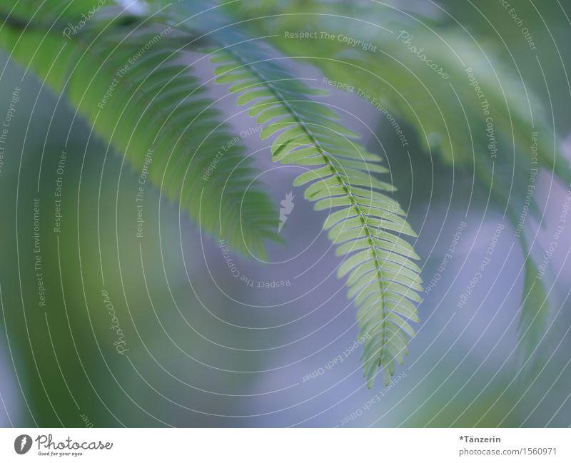 Zweige Pflanze Sommer Baum Grünpflanze Zweige u. Äste Fröhlichkeit natürlich grün Farbfoto Gedeckte Farben Außenaufnahme Detailaufnahme Menschenleer Tag