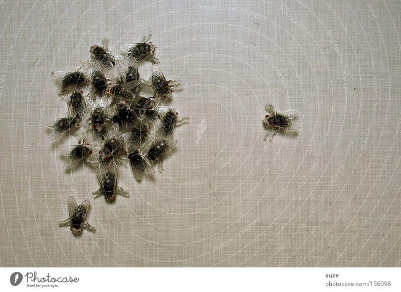 Ansprache schwarz grau lustig außergewöhnlich Fliege Tisch Tiergruppe Kreativität Küche Kunststoff Insekt chaotisch durcheinander Halloween Haufen Tischplatte