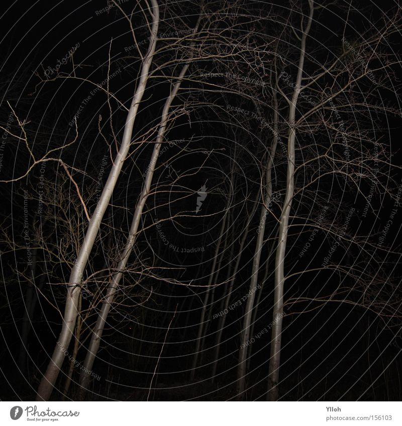 blairwitch Baum Wald Tod Winter kahl Ast dunkel unheimlich Angst flau Schock Horrorfilm gruselig Filmindustrie schwarz gefährlich weiß grau Panik bedrohlich