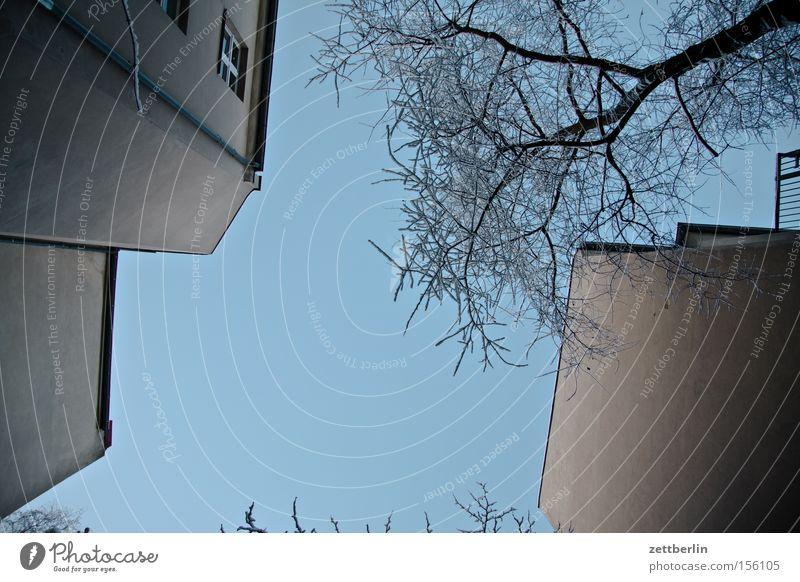 Senkrecht Hinterhof Haus Stadthaus Wand Mauer Brandmauer Fenster Baum Ast Himmel Schönes Wetter Froschperspektive Schnee Winter Berlin Häusliches Leben