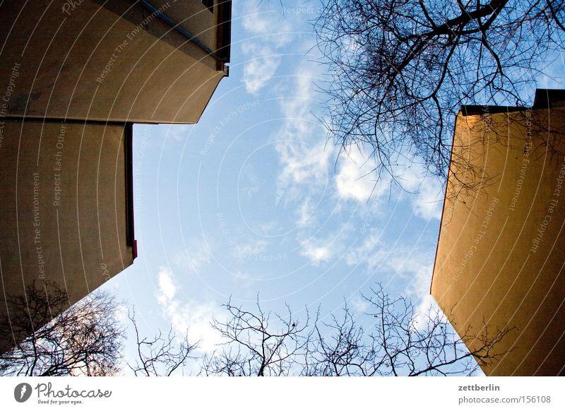 Senkrecht (2) Hinterhof Haus Stadthaus Wand Mauer Brandmauer Fenster Baum Ast Himmel Wolken Froschperspektive Frühlingsgefühle Berlin Plattenbau