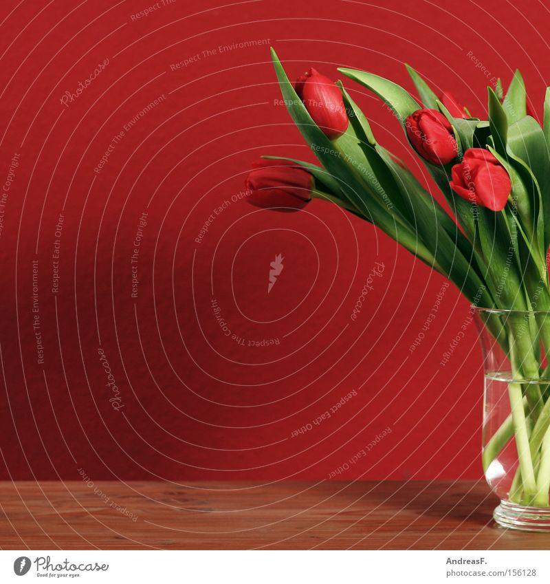 Tulpen rot Stillleben Wand Blume Blumenstrauß Blumenvase Frühling Frühlingsblume Frühlingsfarbe Tapete Wohnzimmer rote tulpen rote wand