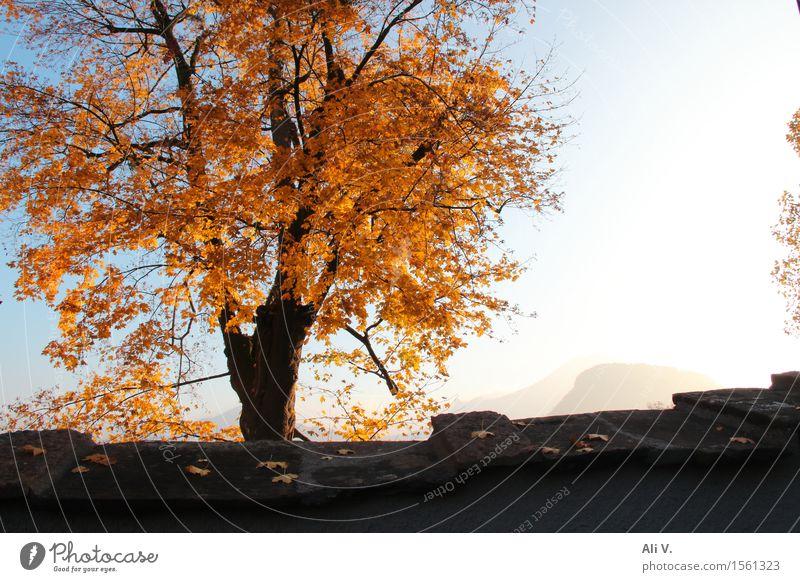 Herbstmorgen Natur Landschaft Pflanze Himmel Sonne Schönes Wetter Nebel Baum Mauer Wand blau braun grau orange weiß Farbfoto Außenaufnahme Menschenleer Morgen