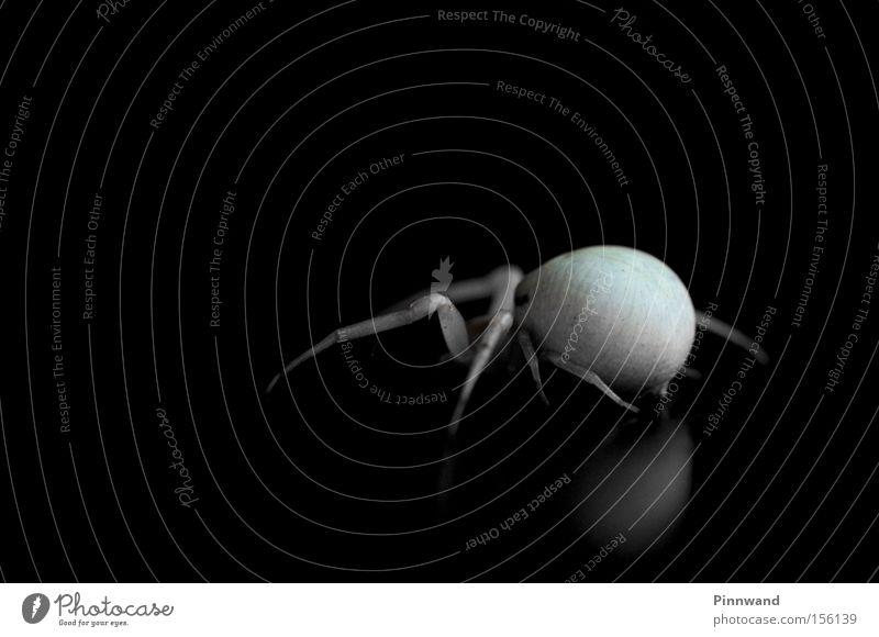 Mr. Viduo Beine Angst Netz Insekt beobachten verstecken Panik Spinne Gift Krankheit Schrecken Schock Monster Alptraum Spinnennetz
