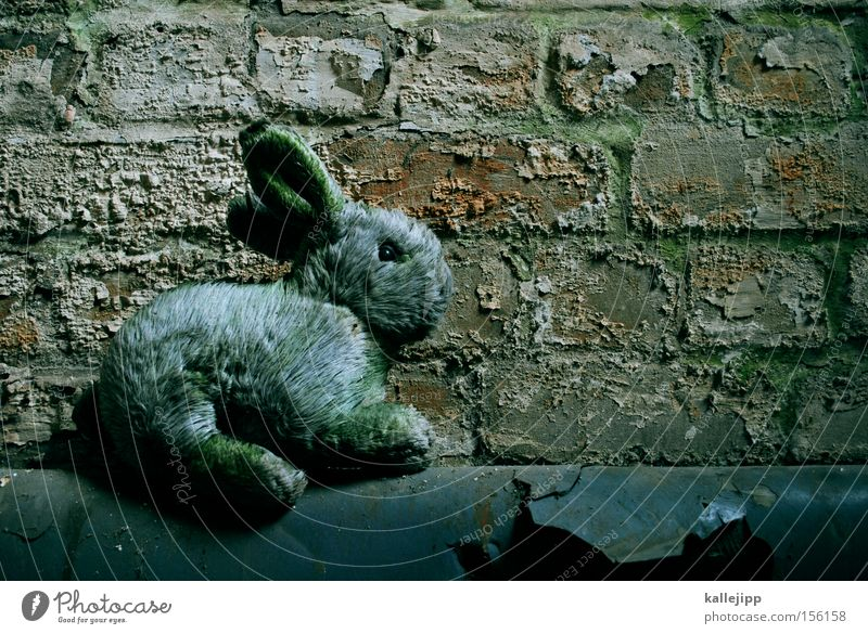 du warst ein rosa kaninchen Hase & Kaninchen Stofftiere Ostern Symbole & Metaphern kaputt Moos Fell Keller Mauer Eisenrohr Röhren sitzen Tier Attrappe Spielzeug