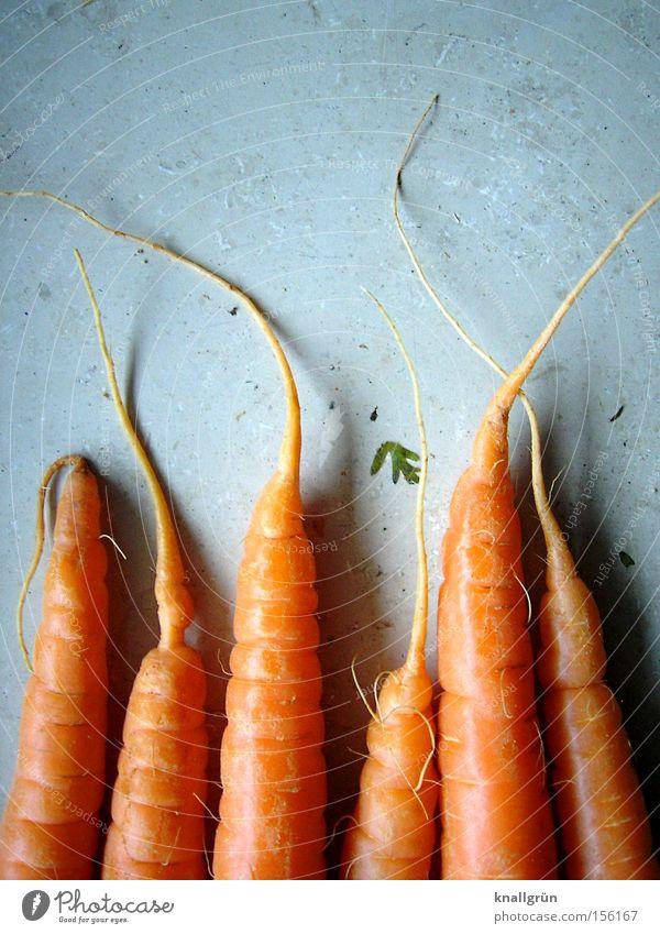 Ich leb' ab jetzt gesund! Möhre orange Gemüse Vegetarische Ernährung Gesundheit knackig Wurzel Wurzelgemüse Rohkost