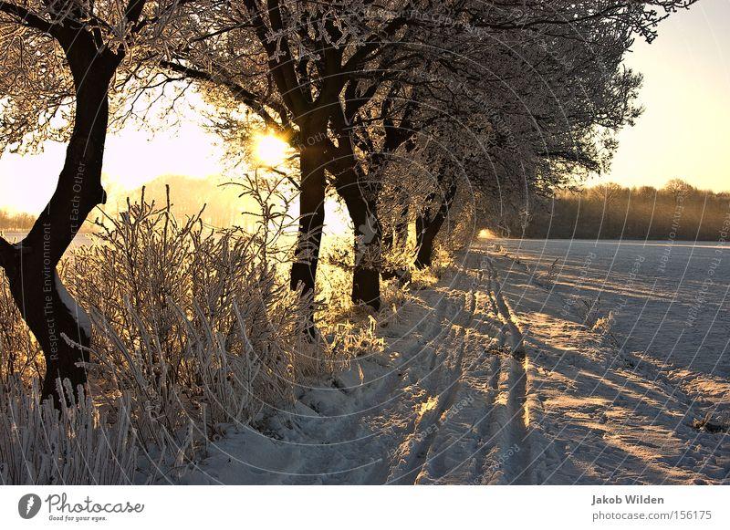 Winter am Niederrhein weiß Baum Sonne kalt Schnee Wege & Pfade Frost Spuren