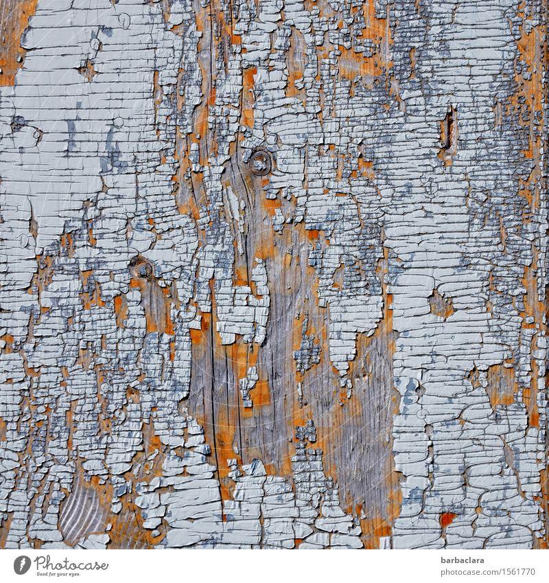 500 | Spuren der Zeit Tür Kunst Maler Kunstwerk Natur Holz Linie blau Farbe Klima Umwelt Vergänglichkeit Wandel & Veränderung Farbfoto Außenaufnahme