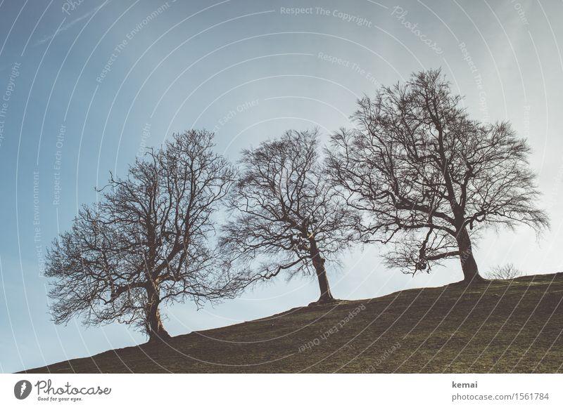Dreiklang Natur nackt schön Baum Landschaft ruhig Umwelt Frühling Freiheit Zusammensein Wachstum Kraft authentisch stehen groß Abenteuer