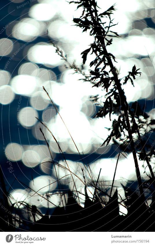 Lichtgeflüster Wasser ruhig Wiese Gras See glänzend Fluss Vergänglichkeit Bach Flussufer